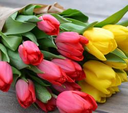 Tulipa-Corte