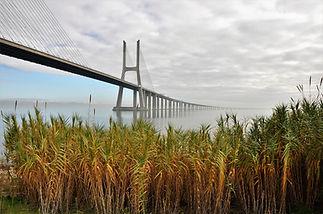 bridge-5755789_1920.jpg