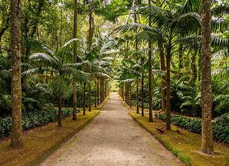 terra-nostra-park-furnas-sao-miguel-isla