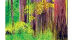 Redwoods-2015a.jpg