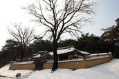 솔숲과 어우러진 낙동강변 마을, 안동 저우리전통테마마을
