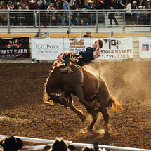 Gary Leffew's Bull Riding School