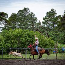 Roping Horse Training