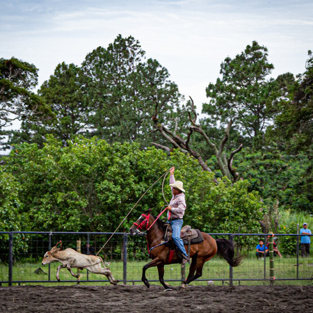 Roping Horse Training