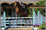 Trainer T'Neil Guerrero-Wise & Andiamo, 1.30m Jumpers, Showplace Spring Spectacular @ Lamplight Equestrian Center