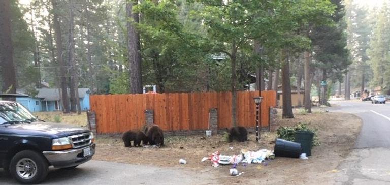 Bears .jpg