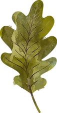 leaf-3 (2).png