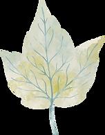 leaf-9.png