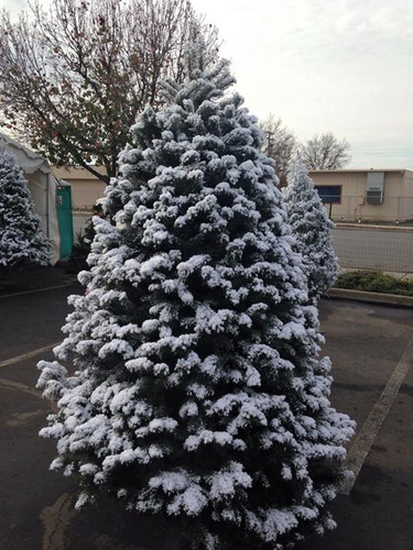 Flocked Christmas tree snow