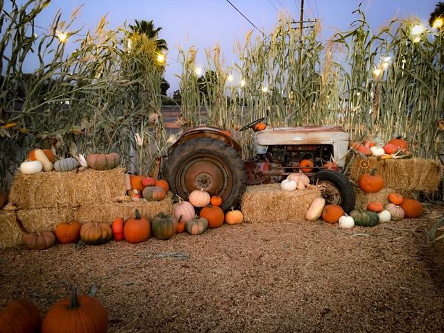 Hannegan's Harvest