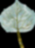 leaf-2.png