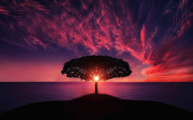 Photo of single tree with sunset in background. From Pixabay.com.
