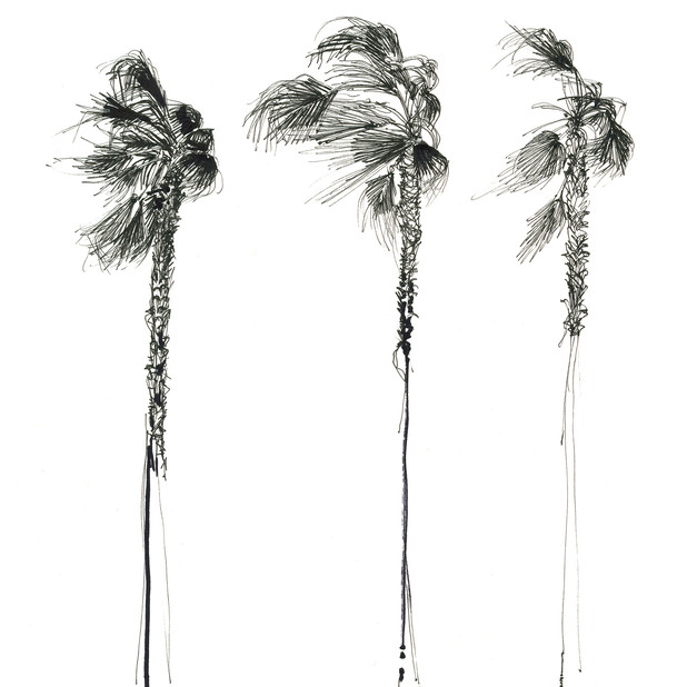 Three Palms