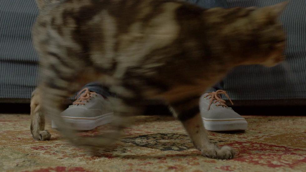CA$HACKS Cats :30
