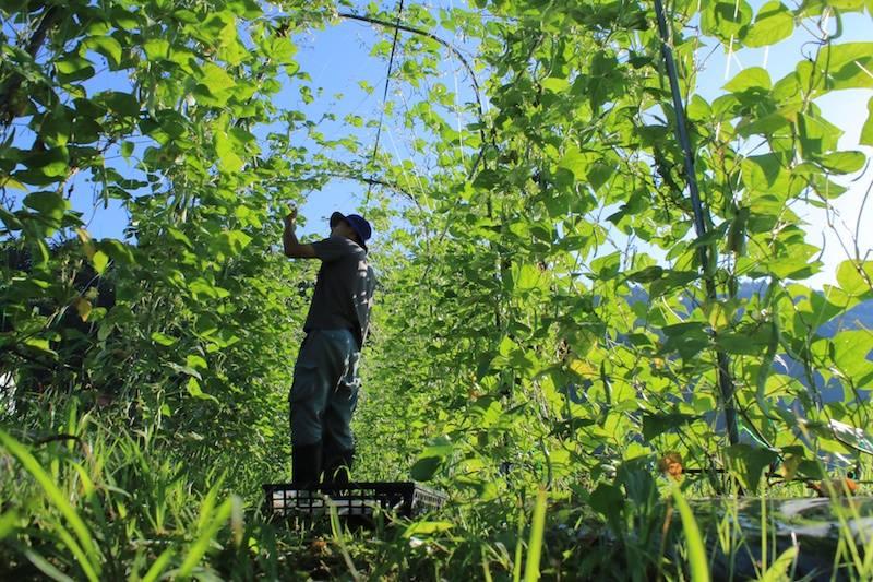 有機農業+エディブルヤード