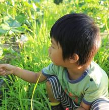 畑で育つ育てる2