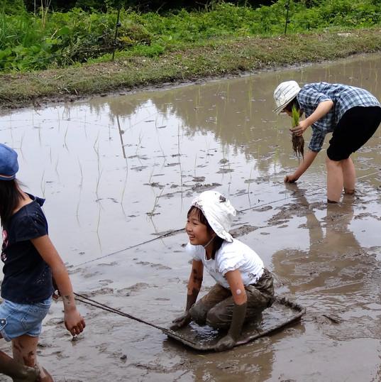 田植え?泥船