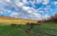 justin-leniger-8VDctoGI2E4-unsplash.jpg