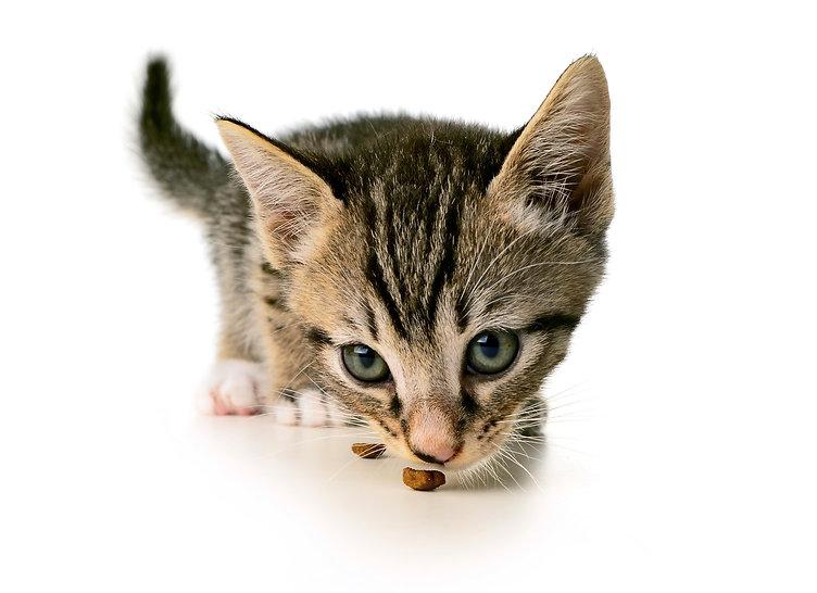 cat_eating_large.jpg
