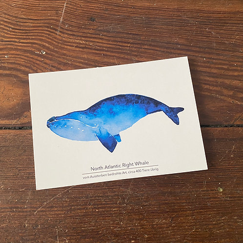 "Postcard ""Whale"""