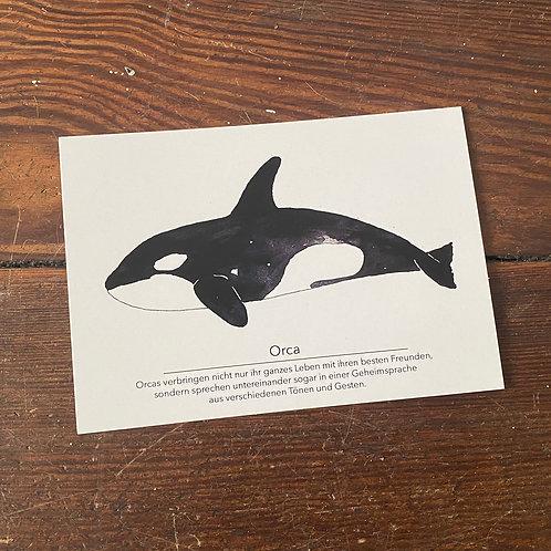 "Postcard ""Orca"""