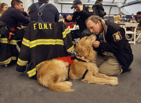 DOG SAVES 967 LIVES ON THE ILL-FATED DAY