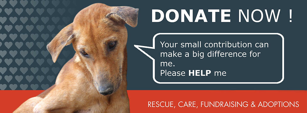 Dog appealing for donation