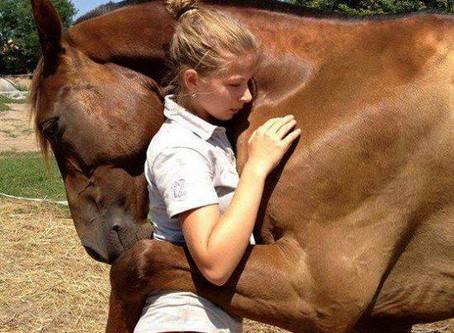The horse named 'Bucephalus'