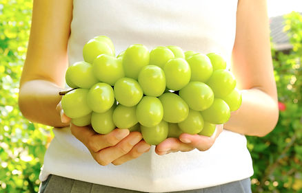 Big bunch of fresh green muscat grape in