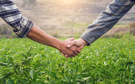 Two farmer shaking hands on potato leave