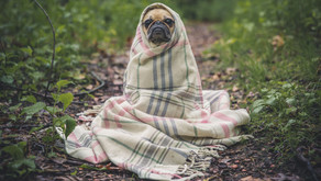 Lymphatic Drainage during Cold, Flu, and Sinus Season