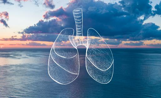 Oceanos: os verdadeiros pulmões do mundo
