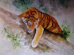 MIDDAY TIGER