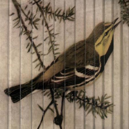 Until death, the bird sang