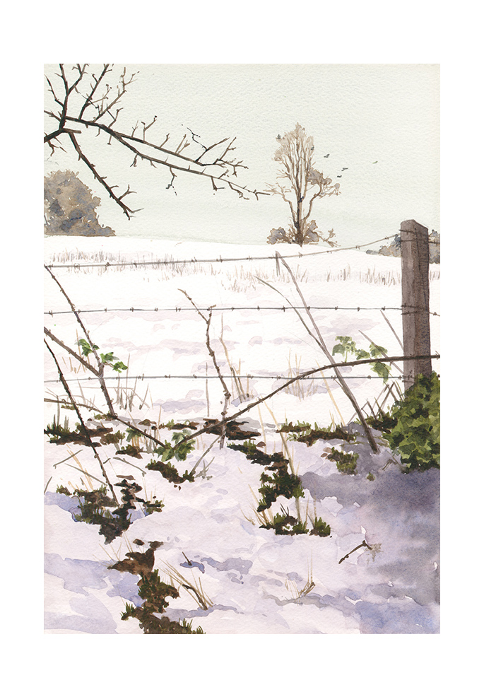 Winter fields 2