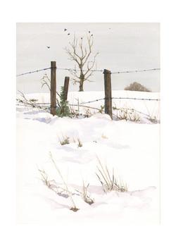 Winter fields 1