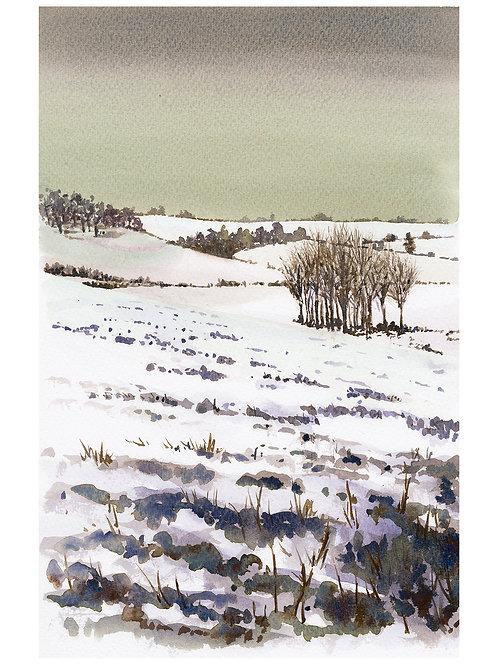 Winter on Marlborough Downs III
