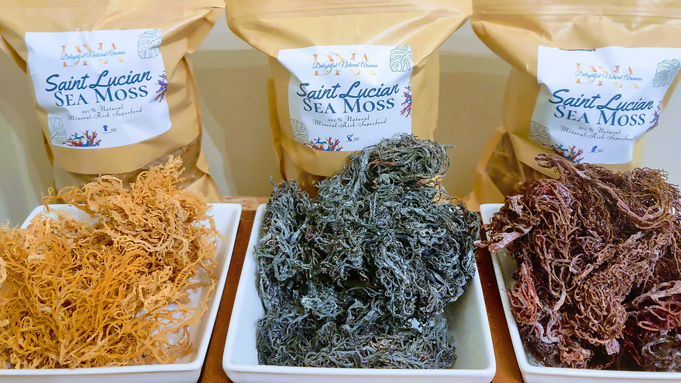 St. Lucian Wildcrafted, Irish Sea Moss-Gold, Purple & Green