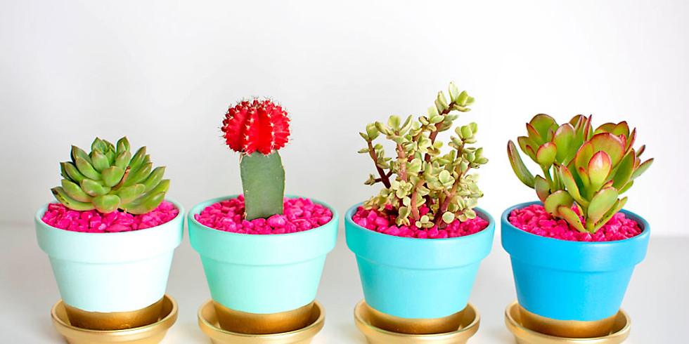 Teen Succulent Plant Night