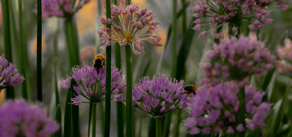 Flowers and Bees 1