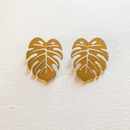 Golden Monstera