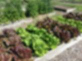 ProjectPic_garden.jpg