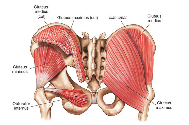 glutes-overall-sci-pic_edited.jpg