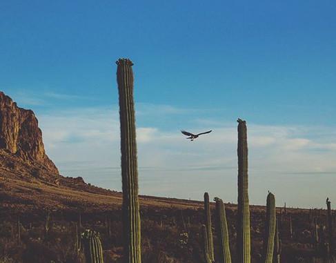 Where eagles dare__#flywell #instagramaz