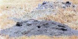 gpc dirt mound