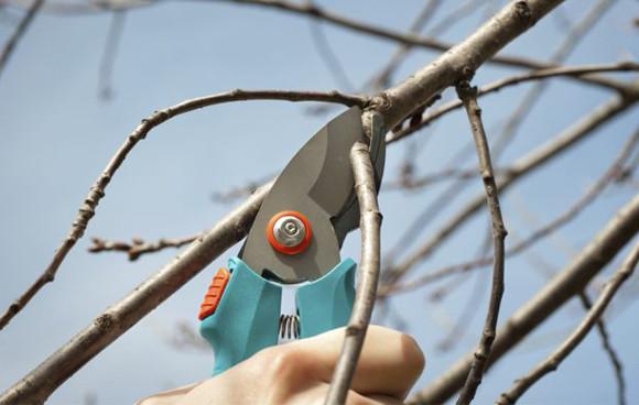 Blog Solimar Leão 5 Dicas de como cuidar das Plantas no Inverno Poda