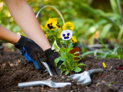 Blog Solimar Leão 5 Dicas para cuidar das Plantas no Inverno