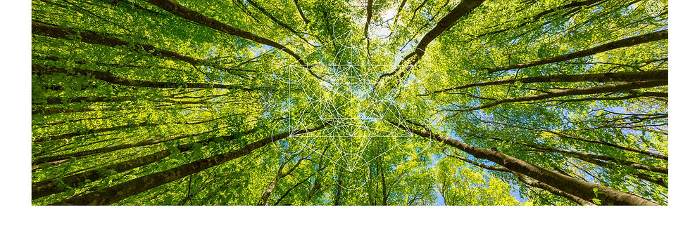 Quadro Bluegaya Metatron Trees em Metacrilato