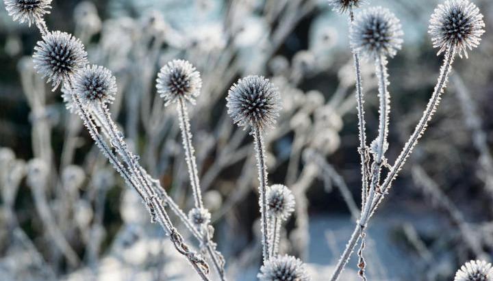 5 Dicas para cuidar do Jardim no Inverno
