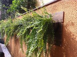 Jardim Vertical de Samambaias